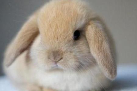 Разведение кроликов как бизнес - выгодно или нет фото