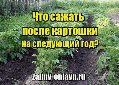 Фотография Что сажать после картошки на грядках на следующий год